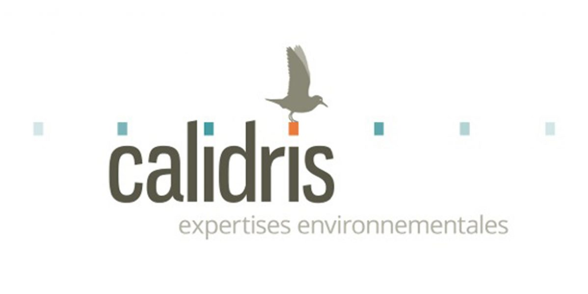 Calidris